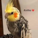 Robbie and Bobbie